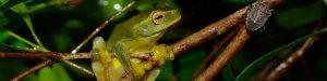 Fauna spotter